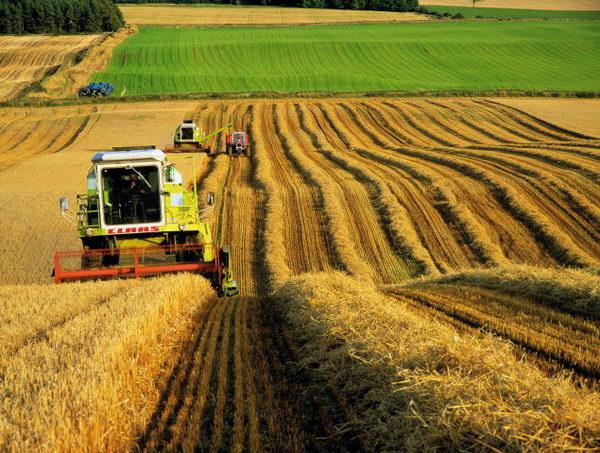 tarım-üretim